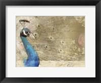 Peacock Royal Framed Print