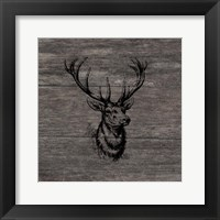 Another Buck Framed Print