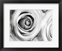 White Noise Rose 1 Framed Print