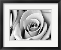 White Noise Rose 2 Framed Print