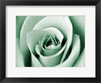 Jade Rose Framed Print