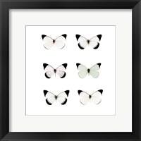 Pale Butterflies 6 Framed Print
