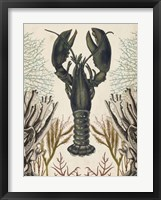 Antiquarian Menagerie - Lobster Framed Print