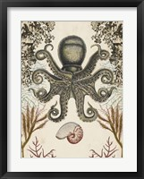 Antiquarian Menagerie - Octopus Framed Print