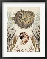 Antiquarian Menagerie - Puffer Fish Framed Print