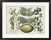 Framed Exotic Weinmann Botanical II