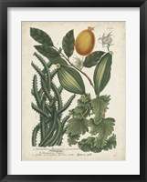 Framed Exotic Weinmann Botanical III