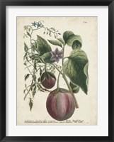 Framed Exotic Weinmann Botanical IV