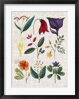 Floral Assemblage IV Framed Print