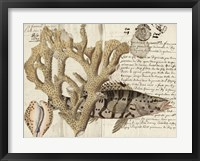 Sealife Journal II Framed Print