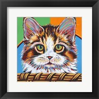 Kitten in Basket II Framed Print
