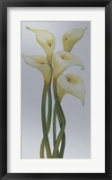 Callas on Silver II Framed Print