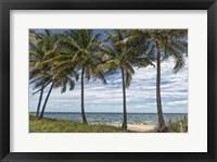 Framed Beach Palms