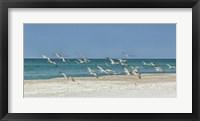 Framed Beach Skimmers