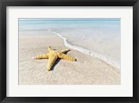 Framed Star Fish Line of Surf