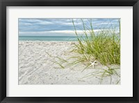 Framed Star Fish and Sea Oats