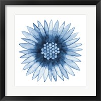 Framed Blue Daisy