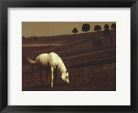 Framed White Horse