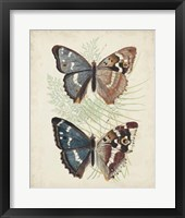 Butterflies & Ferns IV Framed Print