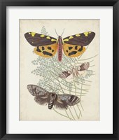 Butterflies & Ferns VI Framed Print