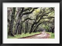 Dirt Road II Framed Print