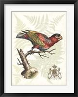 Regal Parrots I Framed Print