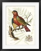 Regal Parrots II Framed Print