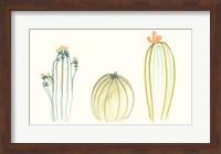 Framed Funky Succulents IV