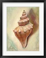 Princess Shell Framed Print