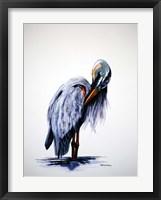 Framed Preening Blue Heron