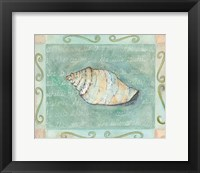 Conch Seashell Framed Print