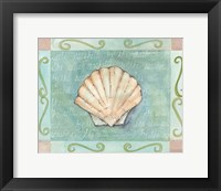 Scallop Seashell Framed Print