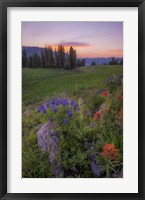 Framed Flower Sunset