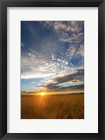 Framed Wheat Field Sunset