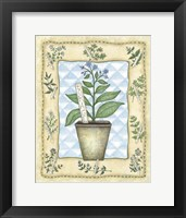 Framed Borage
