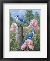 Framed Blue Jays