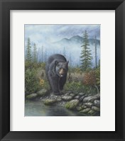 Framed Smoky Mountain Black Bear