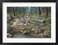 Framed Grey Wolf Mother And Pups