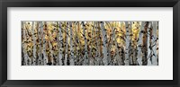 Framed Panor Aspens 1