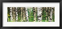 Framed Panor Aspens 4