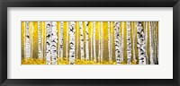 Framed Panor Aspens Yellow Floor