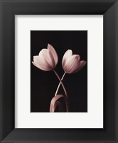 Framed Blush Tulip I