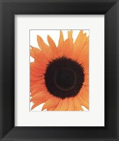 Framed Sunflower In Bloom