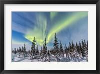 Framed Aurora borealis over the Trees in Churchill, Manitoba, Canada