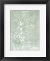 Framed Essential Botanicals I
