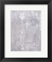 Framed Essential Botanicals II