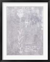 Framed Essential Botanicals II