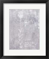 Essential Botanicals II Framed Print