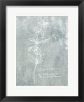 Essential Botanicals III Framed Print