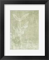 Framed Essential Botanicals IV